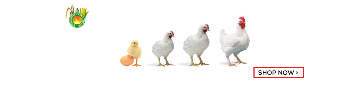 POULTRY AND LIVESTOCK
